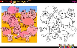 Pig characters group coloring book Royalty Free Stock Image