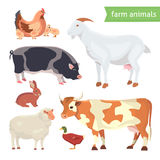 Cartoon Vector Illustration Set of  Farm Animals  on White Stock Images