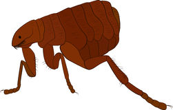Cartoon vector image of flea  on white Stock Photos
