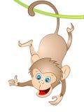 Cartoon Vector Monkey Swinging Stock Photography