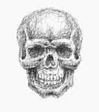 Cartoon Vector Skull . Hand drawn. Stock Photos