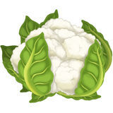 The Cartoon vegetable- illustration for the children - XXL size royalty free illustration