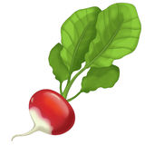 The Cartoon vegetable- illustration for the children - XXL size Stock Image