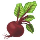The Cartoon vegetable- illustration for the children - XXL size Stock Photos