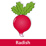 Cartoon Vegetable - Red Radish Stock Photos