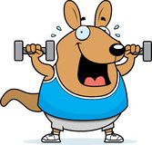 Cartoon Wallaby Dumbbells. A cartoon illustration of a wallaby lifting dumbbell weights Royalty Free Stock Photo