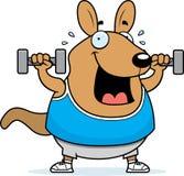Cartoon Wallaby Dumbbells Royalty Free Stock Photo