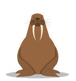 Cartoon walrus with big tusks. Vector illustration Stock Photography