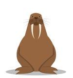 Cartoon walrus with big tusks Stock Photography