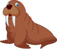 Cartoon walrus Stock Photos