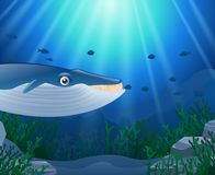 Cartoon whale with Coral. Reef Underwater in Ocean Royalty Free Stock Image