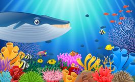 Cartoon whale with Coral. Reef Underwater in Ocean Stock Photos