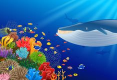 Cartoon whale with Coral Reef Underwater. In Ocean Stock Images