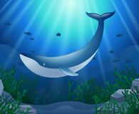 Cartoon whale with Coral Reef Underwater. In Ocean.  illustration Stock Photos