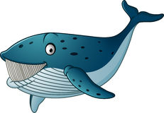 Cartoon whale shark isolated on white background Royalty Free Stock Photography