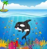 Cartoon whale under the sea. Illustration of Cartoon whale under the sea Royalty Free Stock Images