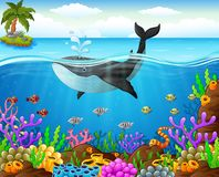 Cartoon whale under the sea. Illustration of cartoon whale under the sea Royalty Free Stock Photo