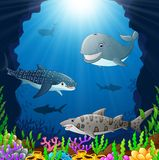 Cartoon whale under the sea Royalty Free Stock Images