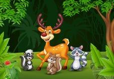 Cartoon wild animals in the jungle Stock Photography