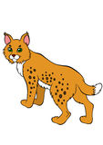 Cartoon wild animals for kids. Cute beautiful lynx. Royalty Free Stock Photos