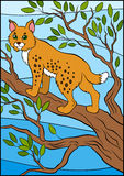 Cartoon wild animals for kids. Cute beautiful lynx. Royalty Free Stock Image