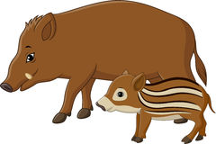 Cartoon wild boar and piglet. Illustration of Cartoon wild boar and piglet Royalty Free Stock Photography