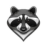 Cartoon wild raccoon animal mascot Stock Image
