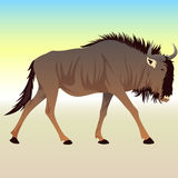 Cartoon Wildebeest. Stylized Colorful Cartoon Wildebeest Background Royalty Free Stock Images