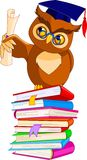 Cartoon Wise Owl with graduation cap and diploma Royalty Free Stock Photography