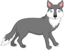 Cartoon wolf isolated on white background Royalty Free Stock Image