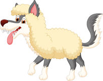 Cartoon Wolf in sheep clothing Royalty Free Stock Image