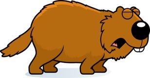 Cartoon Woodchuck Howling. A cartoon illustration of a woodchuck howling Stock Images