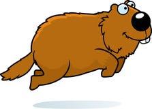 Cartoon Woodchuck Jumping. A cartoon illustration of a woodchuck jumping Stock Photo