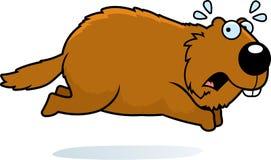 Cartoon Woodchuck Running Away. A cartoon illustration of a woodchuck running away Royalty Free Stock Image