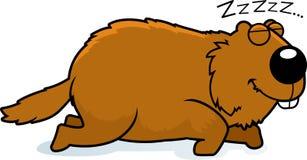Cartoon Woodchuck Sleeping. A cartoon illustration of a woodchuck sleeping Stock Photography