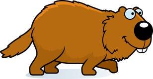 Cartoon Woodchuck Walking. A cartoon illustration of a woodchuck walking Royalty Free Stock Image
