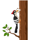 Cartoon woodpecker on a tree Stock Images
