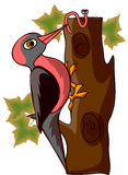 Cartoon woodpecker,vector Stock Image