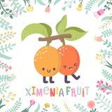 Cartoon ximenia fruit illustration with flowers and lettering. Cute cartoon ximenia fruit illustration with flowers and lettering. Funny character in nice Stock Photo