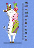 Cartoon zebra with gifts on blue background. Stadiometer. Vector Royalty Free Stock Photo