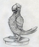 Cartoonish parrot sketch. Sketch of a cartoonish parrot standing on a round platform. Pencil drawing Stock Image