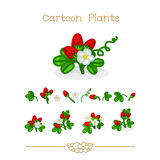 Cartoons: Blooming, ripe, growing strawberry in strawberry fields set. Royalty Free Stock Photo