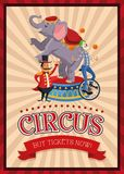 Cartoons of circus festival. Elephant clown and presenter cartoon icon. Circus carnival and festival theme. Colorful  design. Vector illustration Stock Photography