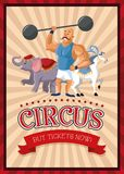 Cartoons of circus festival. Horse elephant and strength man cartoon icon. Circus carnival and festival theme. Colorful  design. Vector illustration Royalty Free Stock Photo