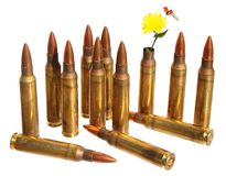 Revival. Defense. Independence. Cartridge case with wild yellow flower in place of bullet out. Ammunition in background. Revival. Defense. Independence. Isolated royalty free stock image