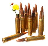 Revival. Defense. Independence. Cartridge case with wild yellow flower in place of bullet out. Ammunition in background. Revival. Defense. Independence. Isolated royalty free stock images