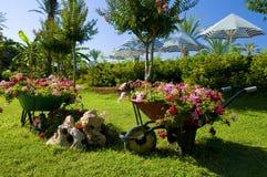 carts сад цветка Стоковые Изображения