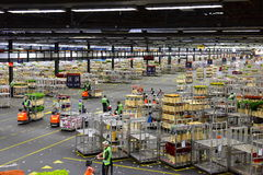 Carts of flowers being sorted and moved at Aalsmeer FloraHolland Royalty Free Stock Photography