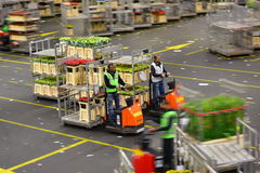 Carts of flowers being sorted and moved at Aalsmeer FloraHolland Royalty Free Stock Photos