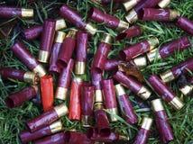 Cartucce del fucile da caccia sul pavimento della foresta Fotografie Stock Libere da Diritti